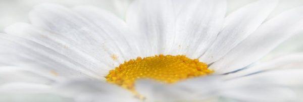 Parfumuri florale albe